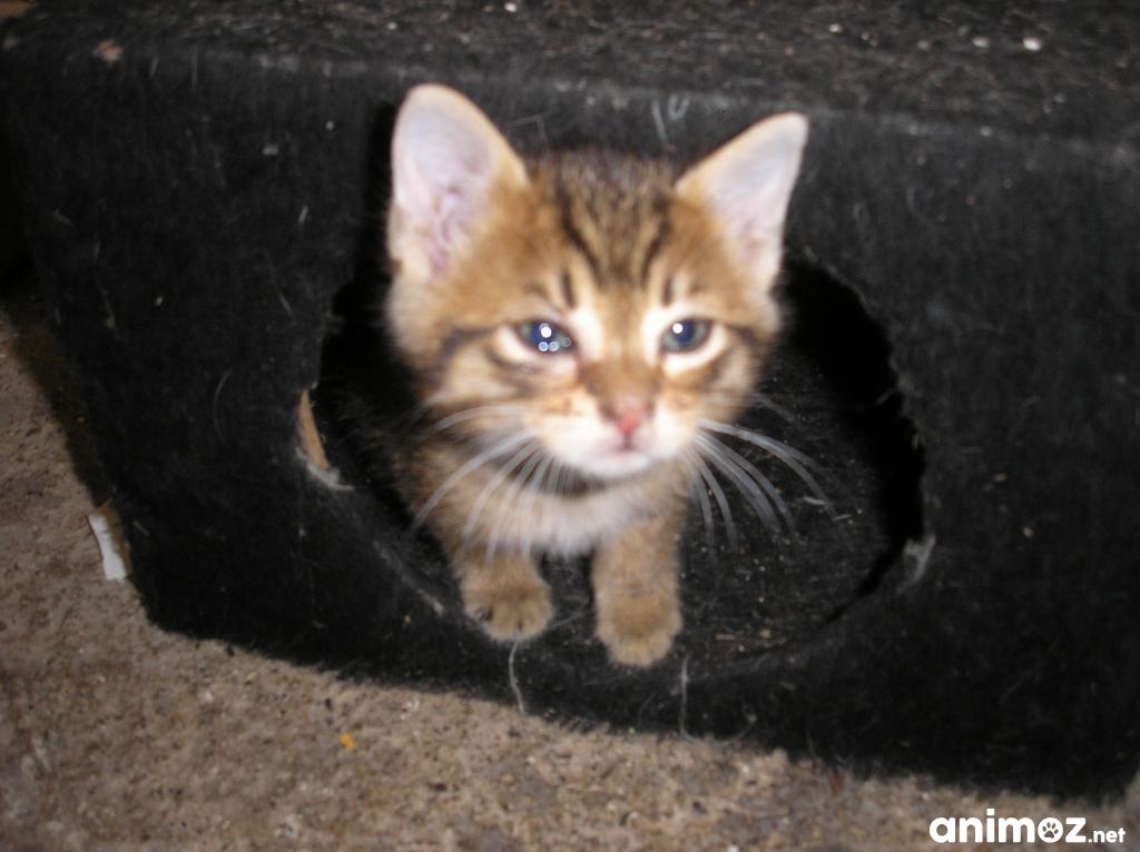 Donne petits chatons bas rhin 67 gratuit sur - Jeux de petit chaton gratuit ...