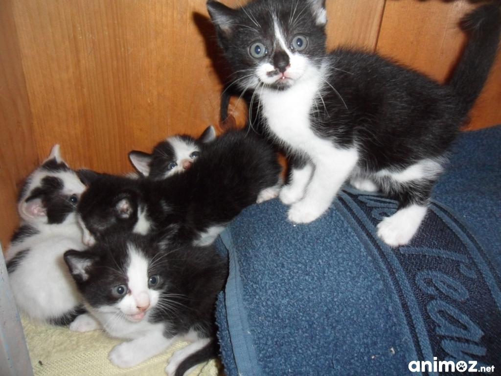 Adoption chaton haut rhin