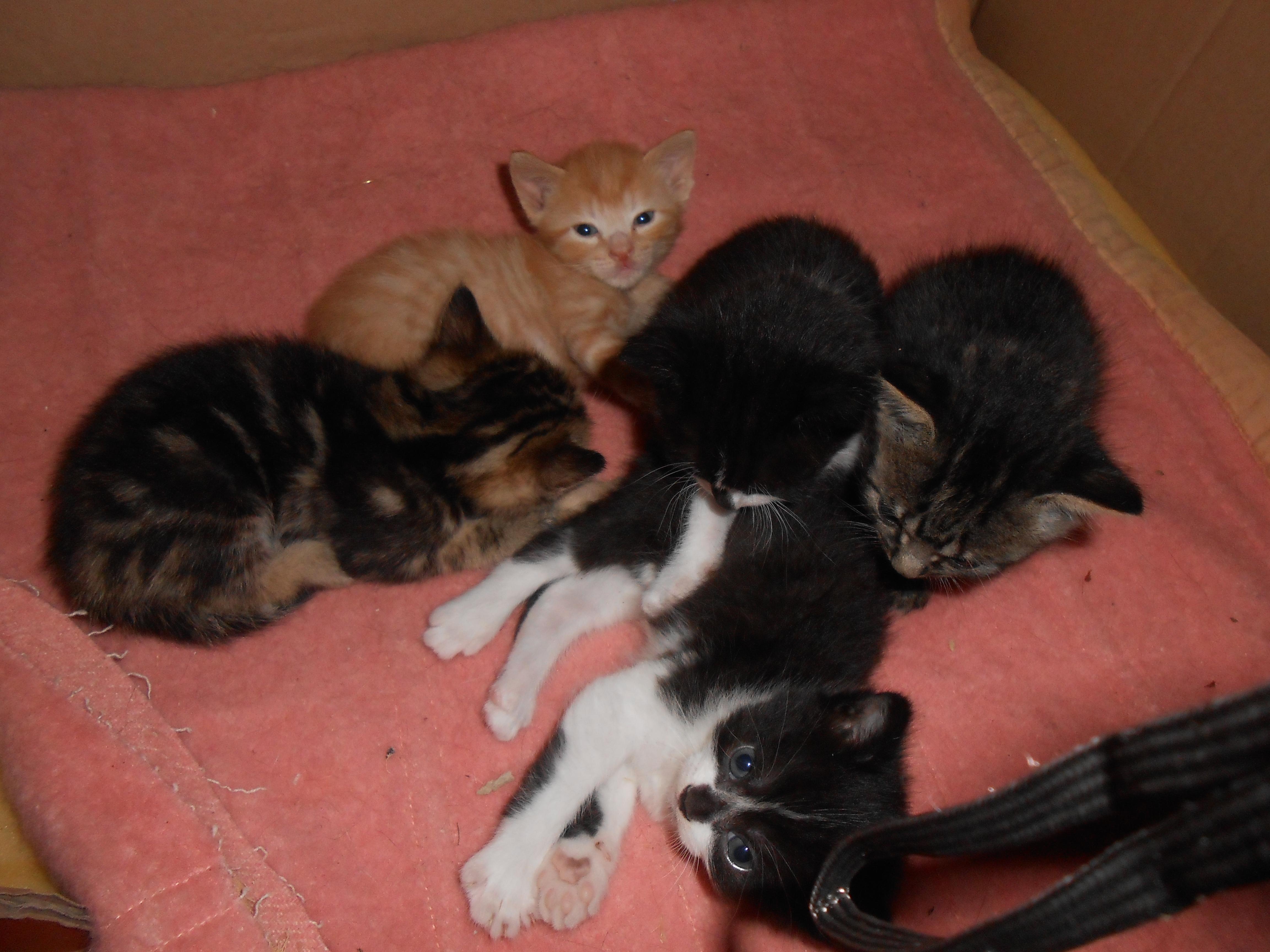 Donne 4 petits chatons ile et vilaine 35 gratuit sur - Jeux de petit chaton gratuit ...