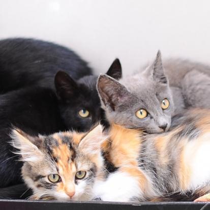 Donne chatons loire atlantique 44 gratuit sur - Chatons gratuit ...