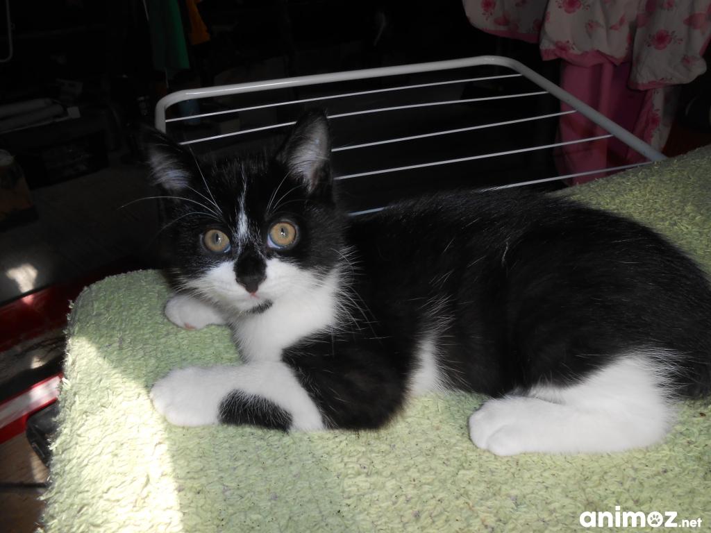 A donner 1 petit chaton ile et vilaine 35 gratuit sur - Jeux de petit chaton gratuit ...