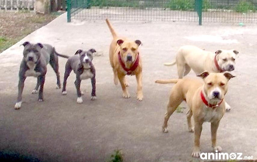 dressage education comportementaliste chien nord douai