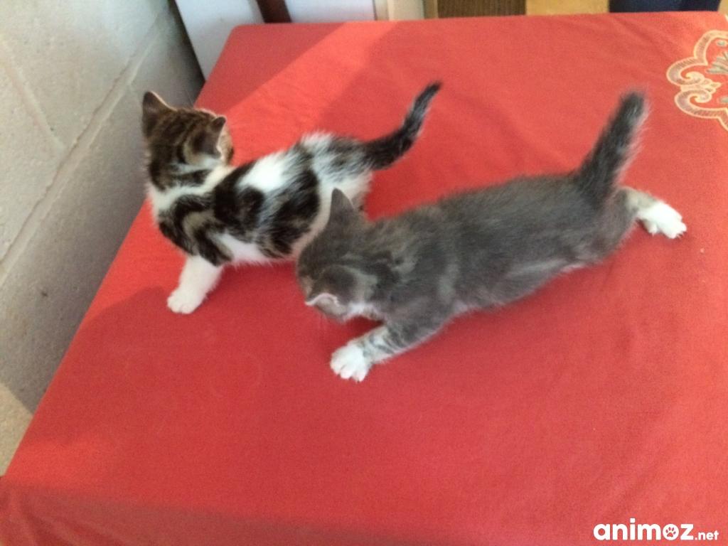Plusieurs chatons donner oise 60 gratuit sur - Le bon coin arbre a chat ...