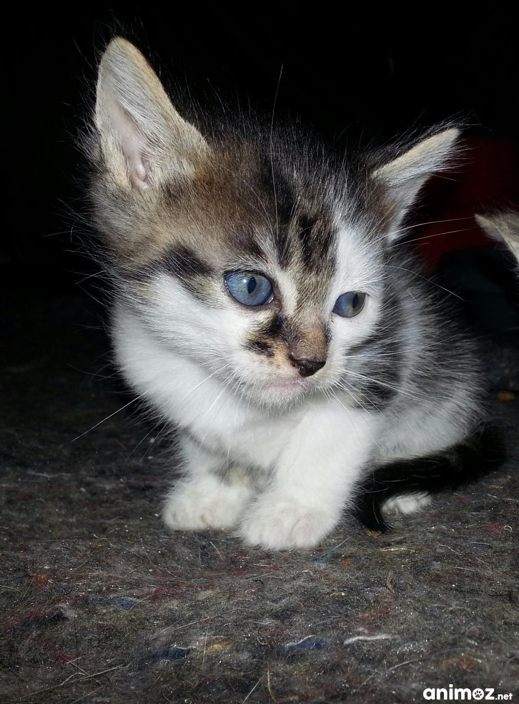 Donne adorable chatons maine et loire 49 gratuit sur - Chatons gratuit ...