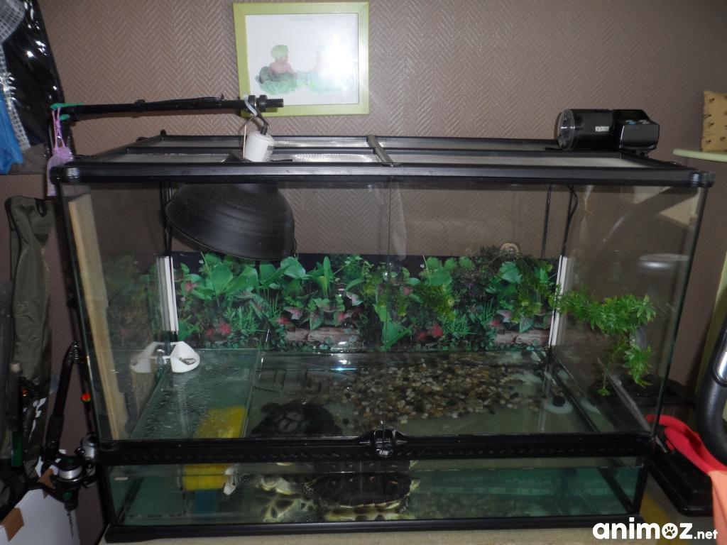 vend 2 tortues d eau + terrarium Pas-de-Calais (62) sur Animoz.net 6a46ddb71f69