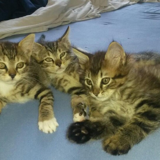 Donne adorable petit chatons loire atlantique 44 - Petit chaton gratuit ...