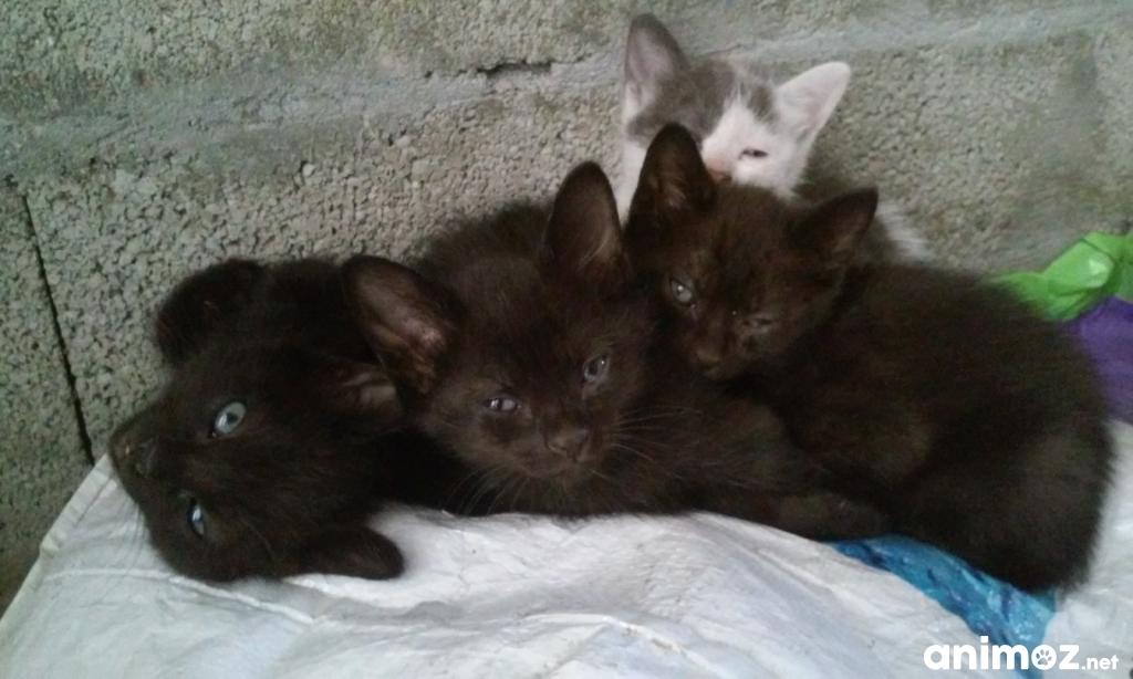 A donner chaton de 2 mois gironde 33 gratuit sur - Ou donner des meubles gratuit ...