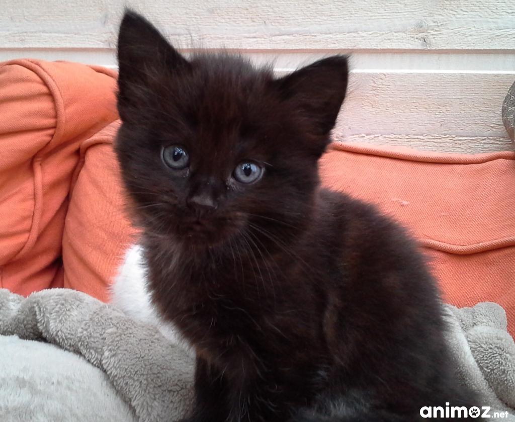 deux chatons donner manche 50 gratuit sur. Black Bedroom Furniture Sets. Home Design Ideas