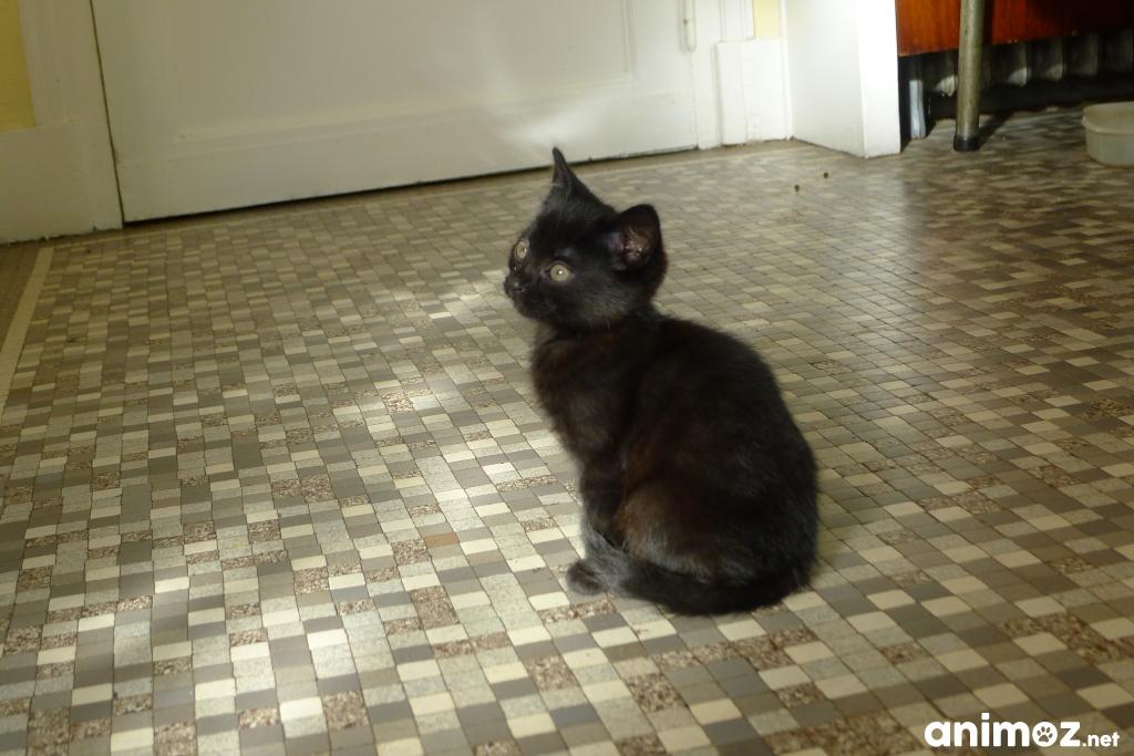 chaton donner maine et loire 49 gratuit sur. Black Bedroom Furniture Sets. Home Design Ideas