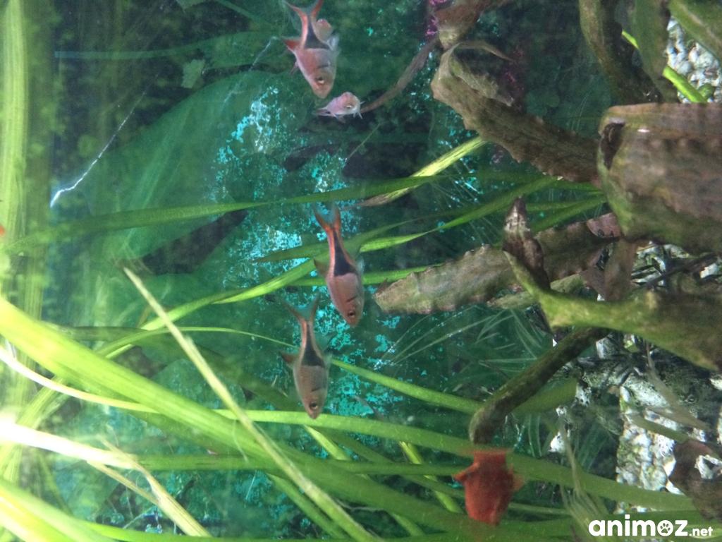 Donne poissons aquarium tropical pyr n es atlantiques 64 for Donne poisson