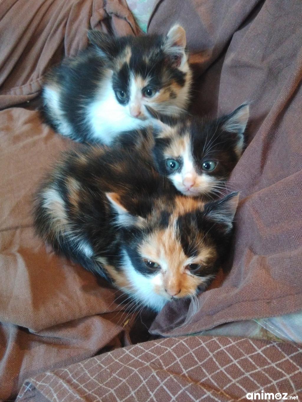 Donne chaton charente 16 gratuit sur - Jeux de petit chaton gratuit ...