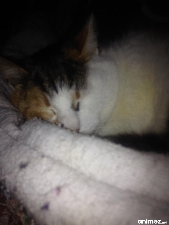 Don d 39 un chat femelle yvelines 78 gratuit sur - Un chat gratuit ...
