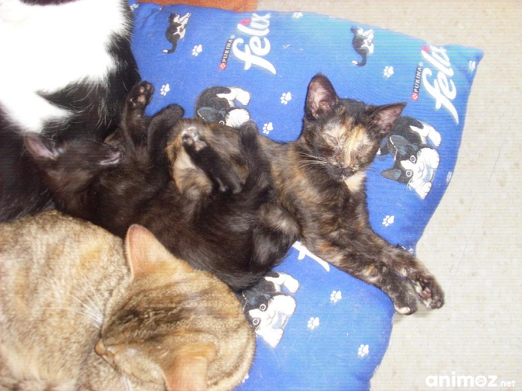 chatons a donner loire 42 gratuit sur. Black Bedroom Furniture Sets. Home Design Ideas