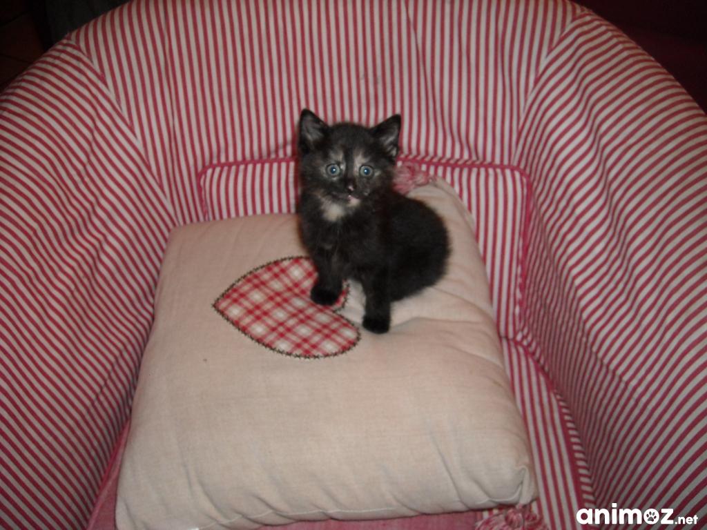 don d 39 un chaton nord 59 gratuit sur. Black Bedroom Furniture Sets. Home Design Ideas