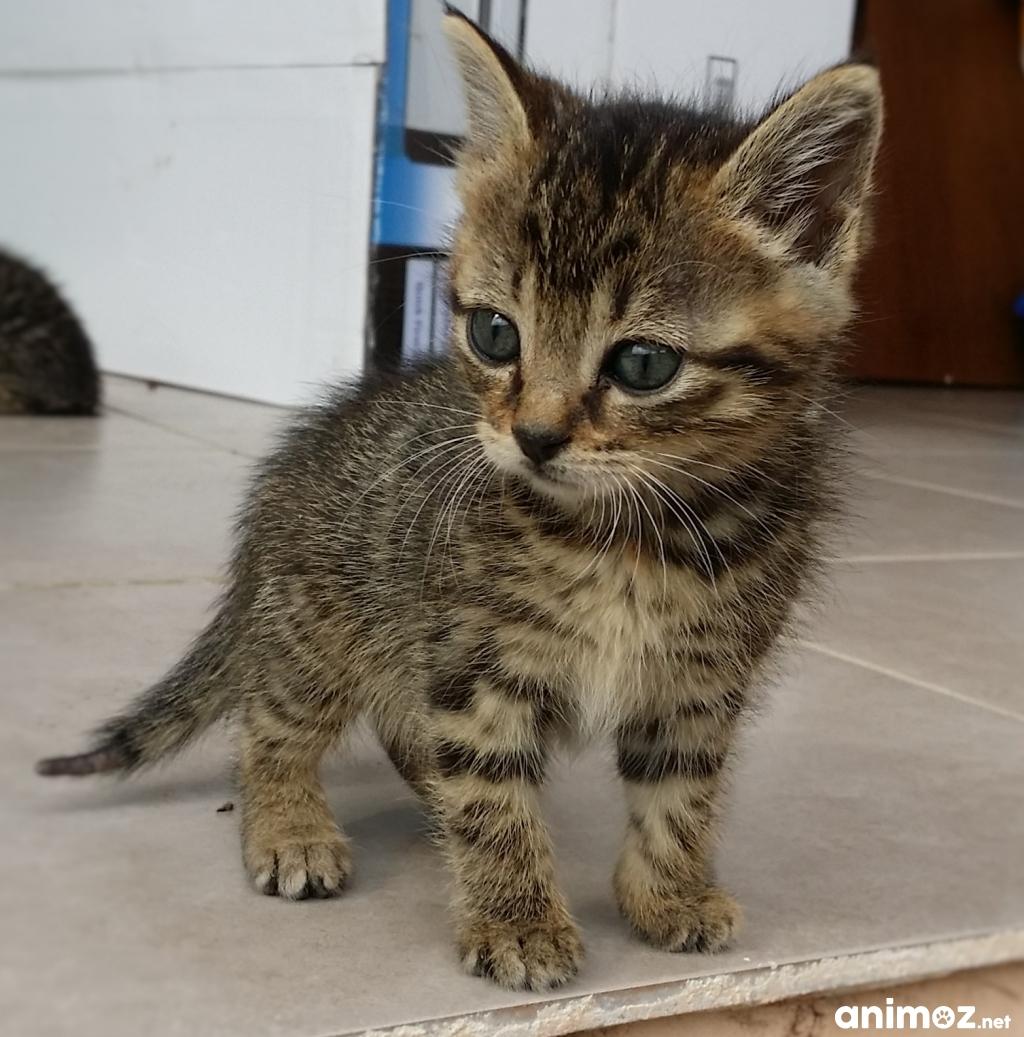 Donne 5 chatons de 2 mois pyr n es orientales 66 - Un chat gratuit ...