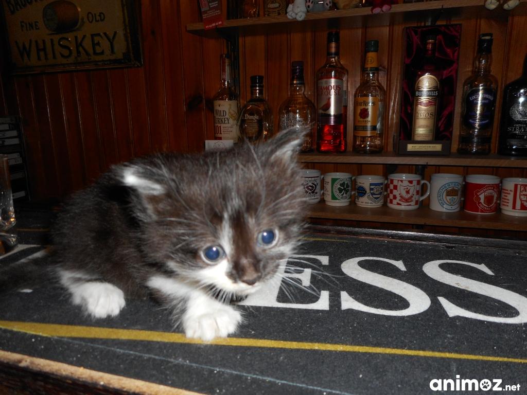 Donne chatons sarthe 72 gratuit sur - Chatons gratuit ...
