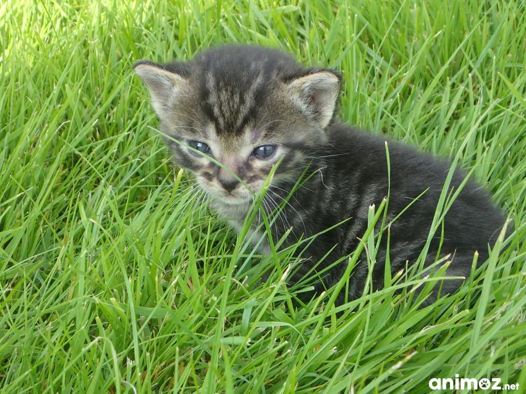 Donne chatons oise 60 gratuit sur - Chatons gratuit ...