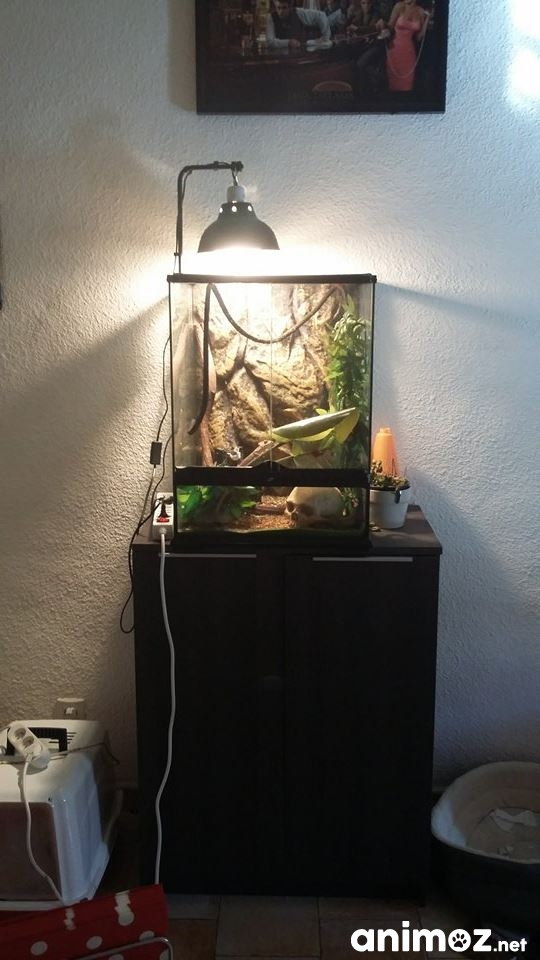 Vends cam l on calyptratus terrarium meuble gard 30 for Meuble cameleon