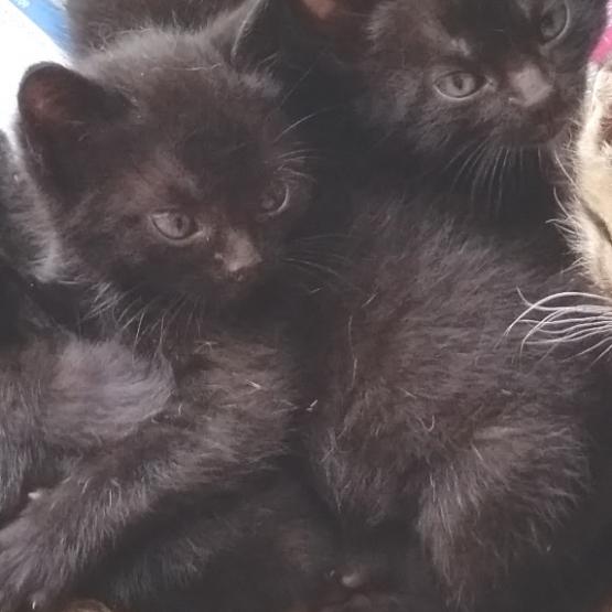 donne adorables chatons loire atlantique 44 gratuit sur. Black Bedroom Furniture Sets. Home Design Ideas