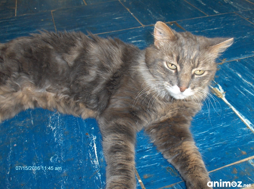 grand chat adulte gris angora marseille 13004 gratuit - Chat Adulte Gratuit