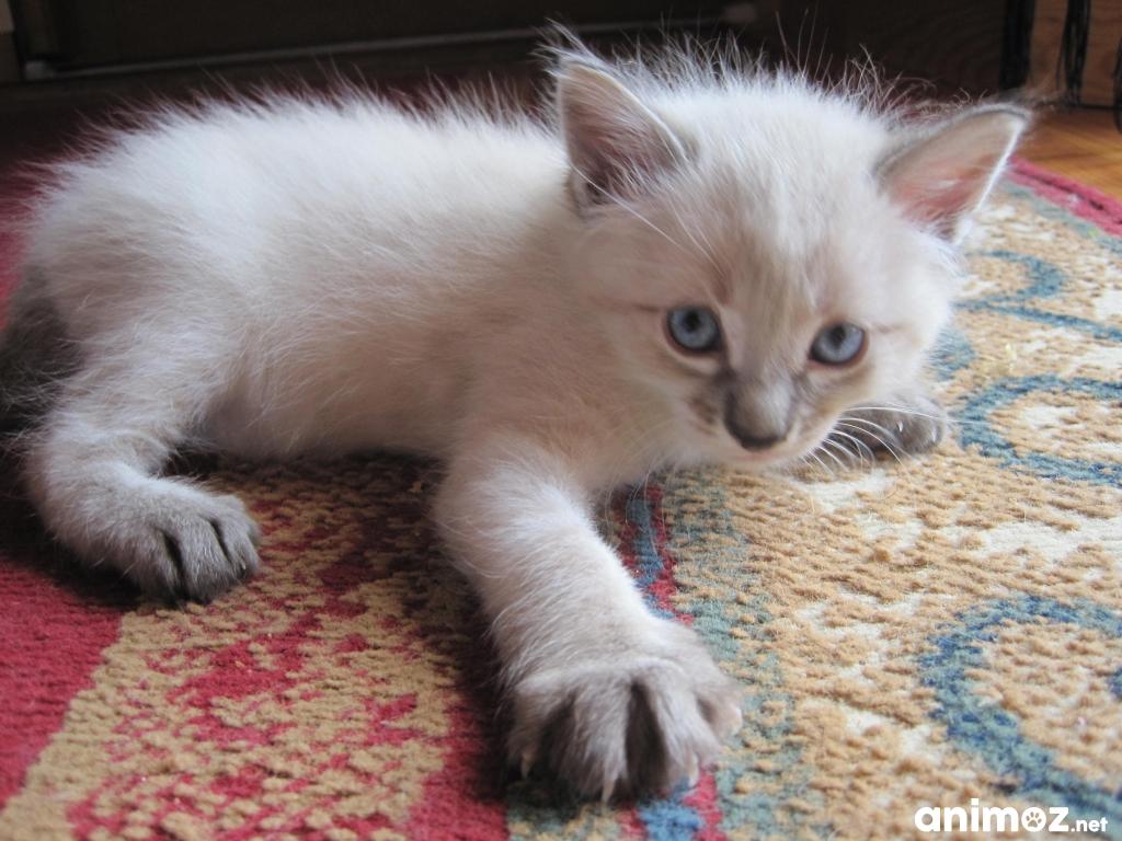Donne chatons landes 40 gratuit sur - Chatons gratuit ...