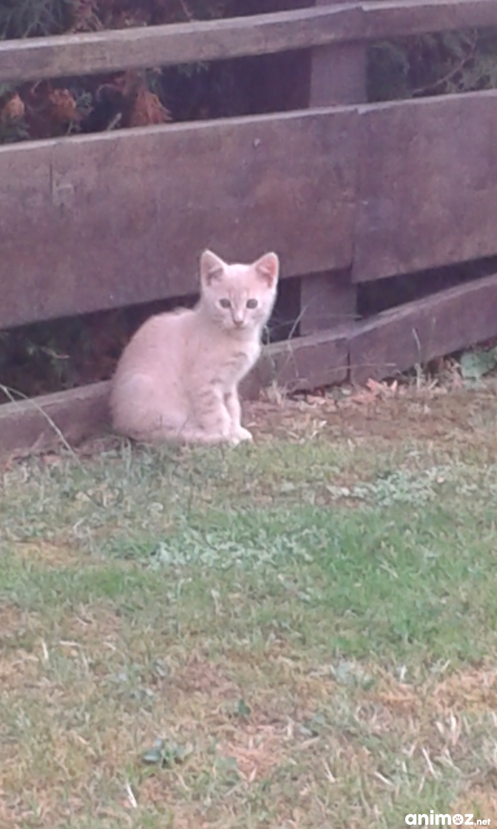 Cherche foyer pour adorable petit chaton ne dans mon jardin vosges 88 gratuit sur - Jeux de petit chaton gratuit ...