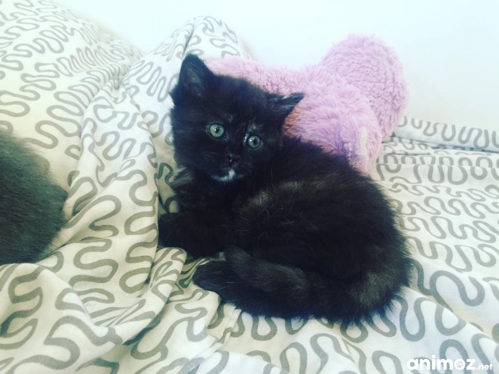 donne deux chatons haute garonne 31 gratuit sur. Black Bedroom Furniture Sets. Home Design Ideas