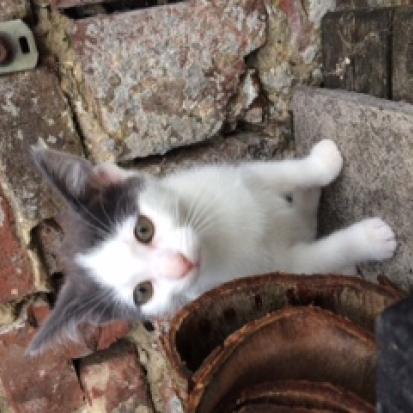 Donne chatons contre bon soin somme 80 gratuit sur - Donne carton demenagement gratuit ...