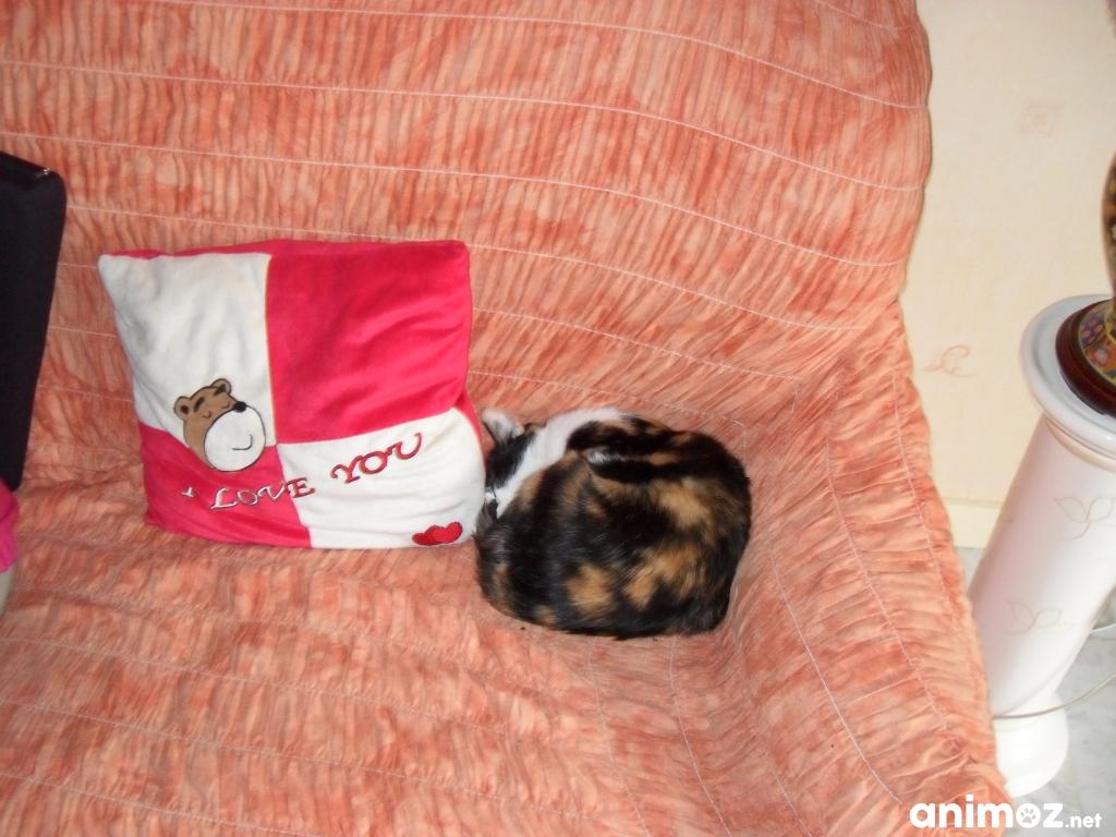 chlo u00e9 douce chatte cherche un foyer yvelines  78