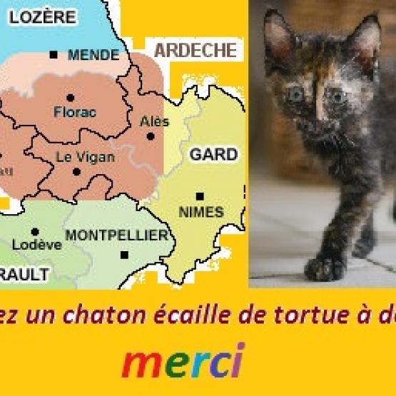 Cherche A Adopter Chaton Gard 30 Gratuit Sur Animoz Net