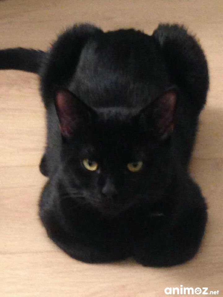 Adoption chat en indre et loire