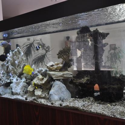 Annonces poissons sur for Vend aquarium