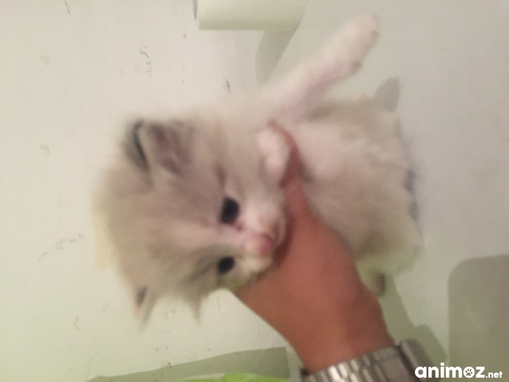 Chaton a donner vaucluse 2017
