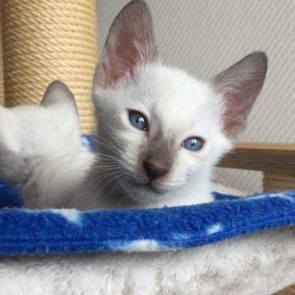 Superbes chatons à l'adoption Hauts-de-Seine (92