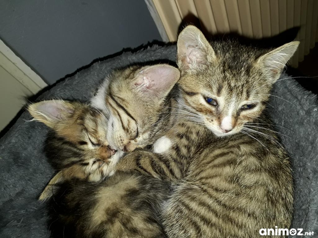 Adoptez un chaton paris 75 gratuit sur - Un chat gratuit ...