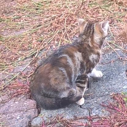 chat maine et loire