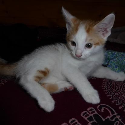 Donne contre bons soins 3 chatons savoie 73 gratuit - Petit chaton gratuit ...