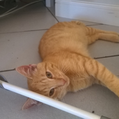Chat sexe aulnay sous bois