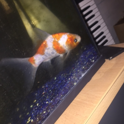 Annonces poissons donner sur for Poisson rouge a donner